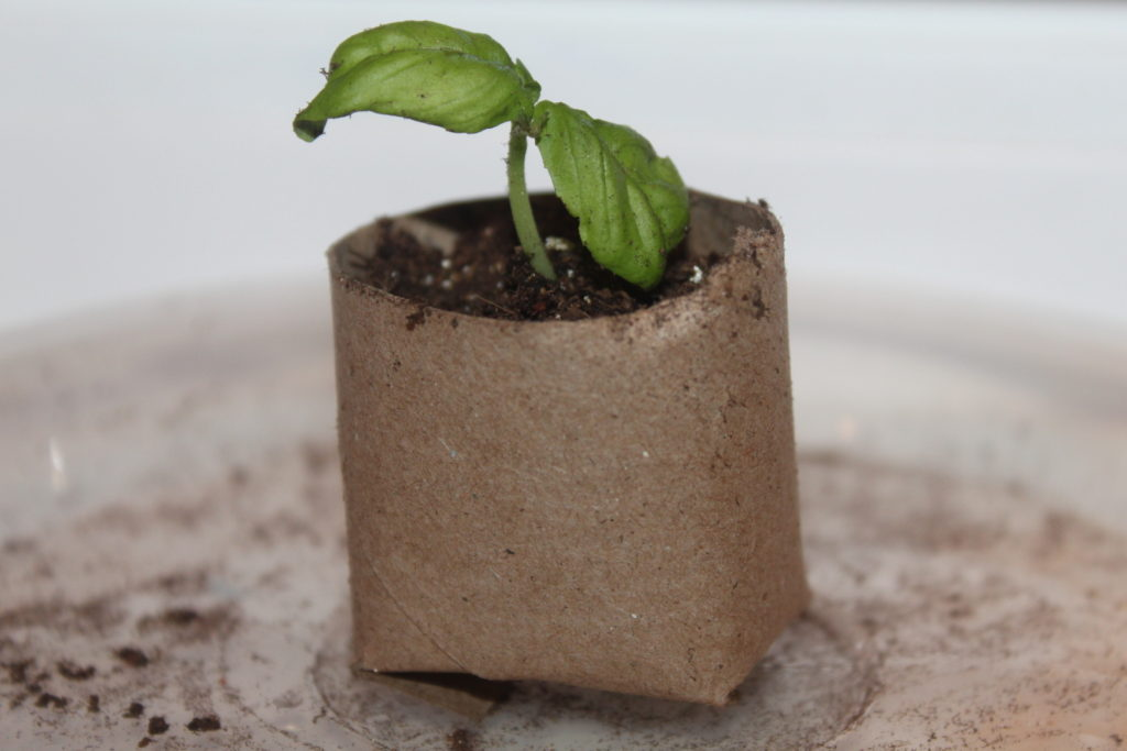 biodegradable seed starting containers