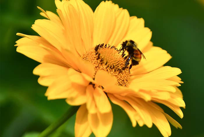 butterflies, birds and bees