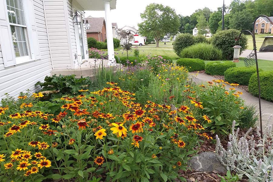 Tricia 39 S Home Grown Prairie Garden A Gorgeous Display Of
