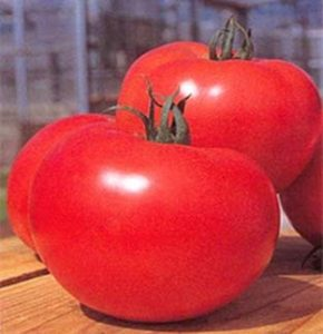 growing container tomatoes