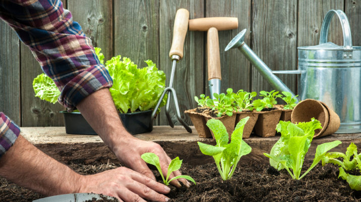 fertilizing naturally