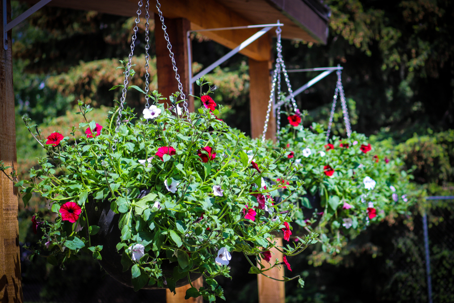 overgrown hanging baskets