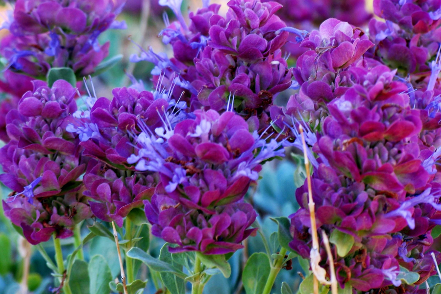 Purple Perennials! 4 Great Plants To Add Purple To The ...