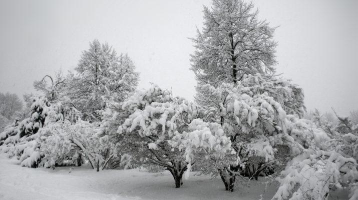 predicting winter