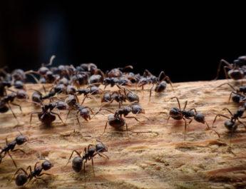 stop ants