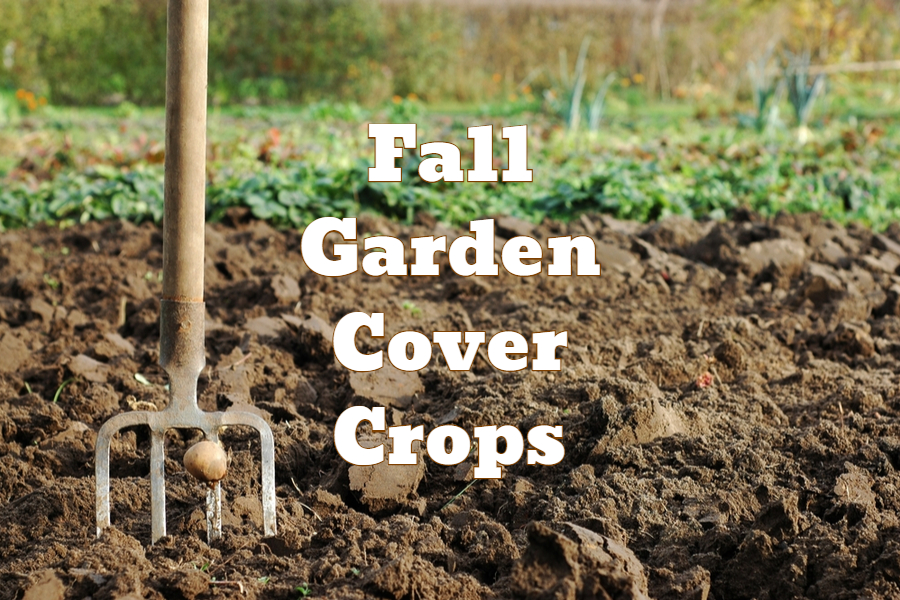 The Amazing Benefits Of Planting A Fall Garden Cover Crop