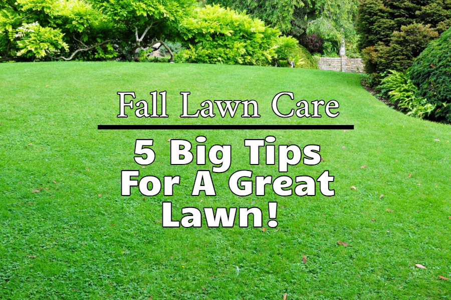 5 Fall Lawn Care Tips To Get Your Gr In Great Shape