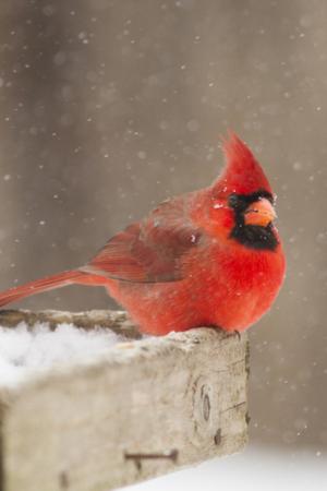 winter bird tips