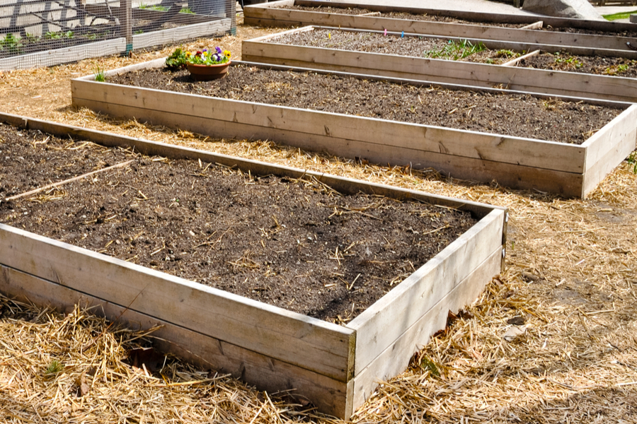Building Raised Beds From Wood To Grow Vegetables Herbs And More
