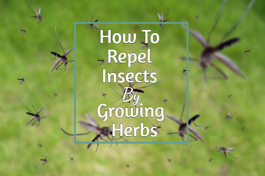How To Repel Insects With Herbs Keep Mosquitoes Gnats Flies Away