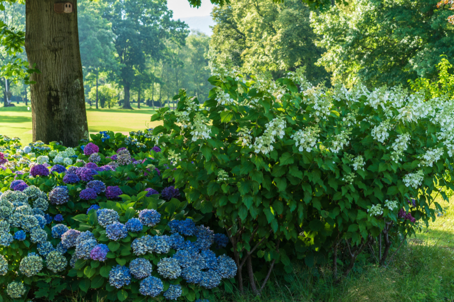Shade Loving Perennials Plants To Grow Where The Sun Doesn T Shine