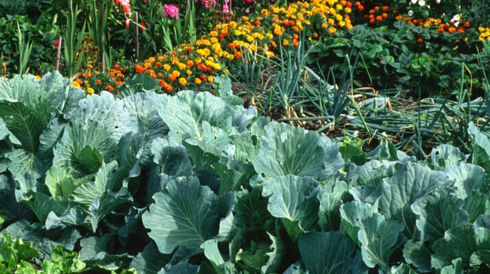 fertilize vegetable plants