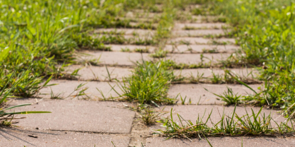 kill weeds with vinegar
