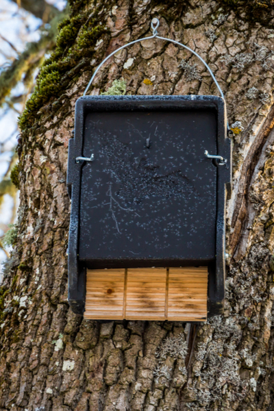bat house on a tree