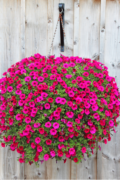 replant hanging baskets