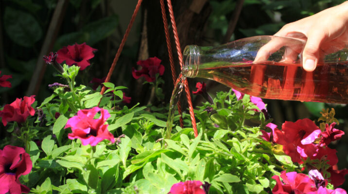 fertilize hanging baskets