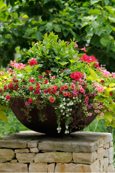 shallow planter