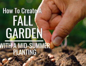 create a fall vegetable garden