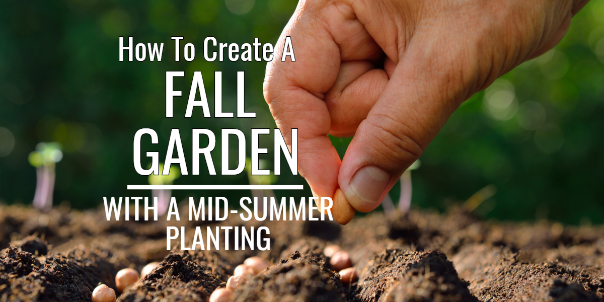 How To Create A Fall Vegetable Garden With A Mid Summer Planting