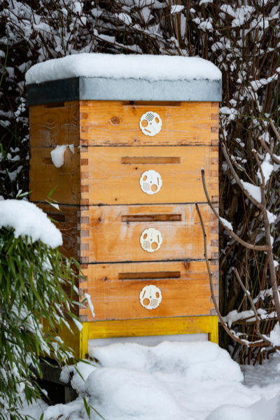 how honey bees survive winter