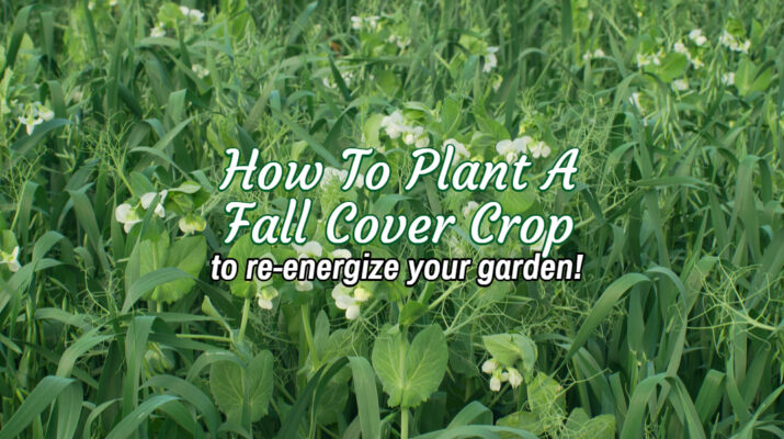 how to plant a cover crop