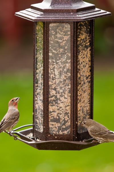 Making Homemade Bird Seed