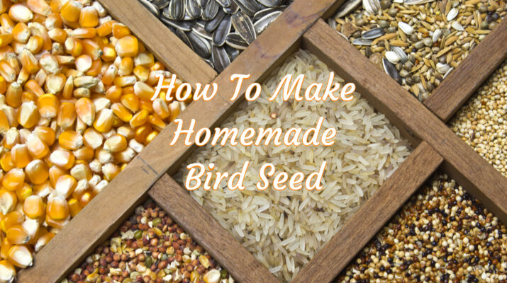 homemade bird seed