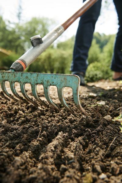 raking a garden