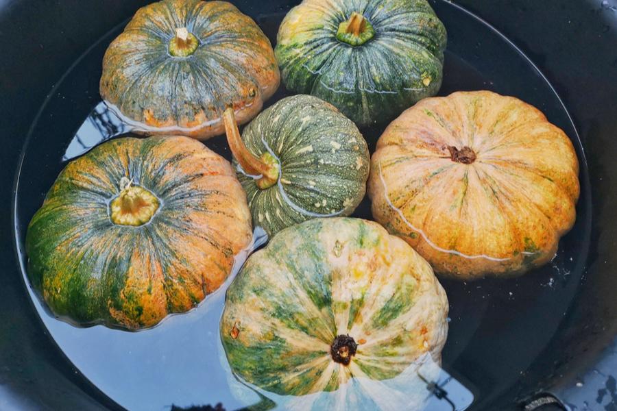 soaking pumpkins