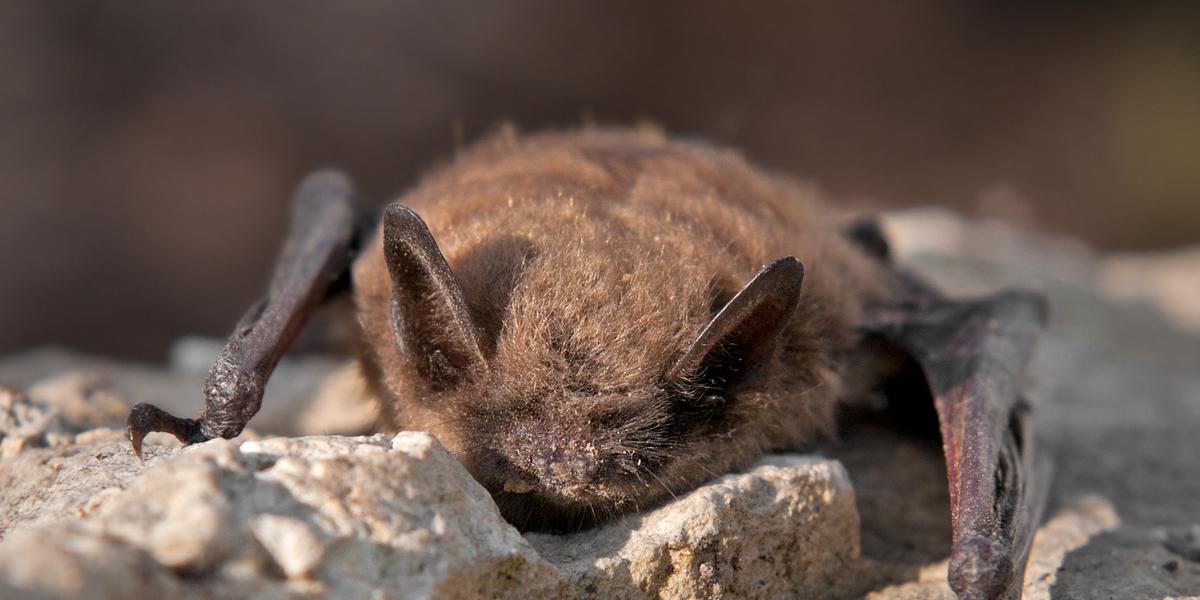 attracting bats