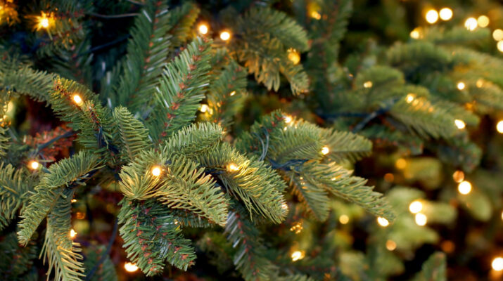 Best Christmas Tree Varieties