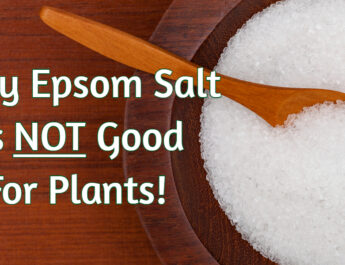 epsom salt on plants