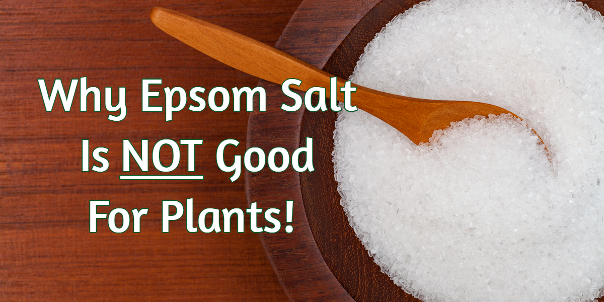 Using Epsom Salt On Plants Why It Is Not The Miracle Cure For Plants