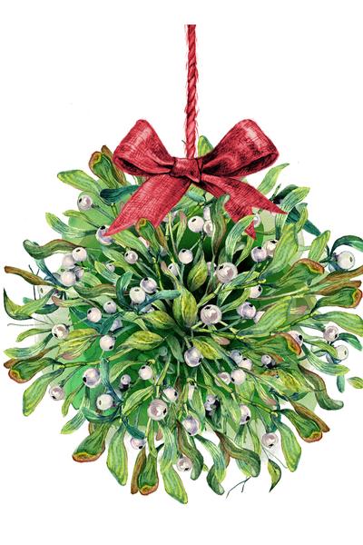 the mistletoe plant