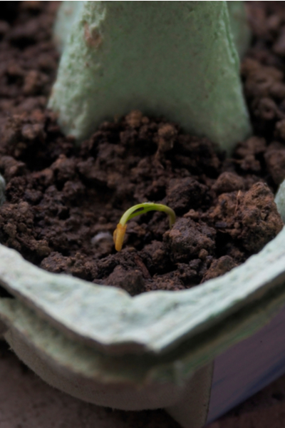 starting seeds in recycled containers