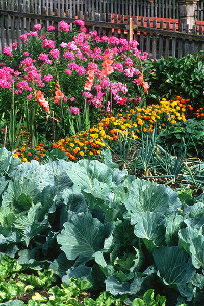 vegetable garden and flowers