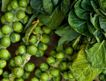 how to grow brusells sprouts