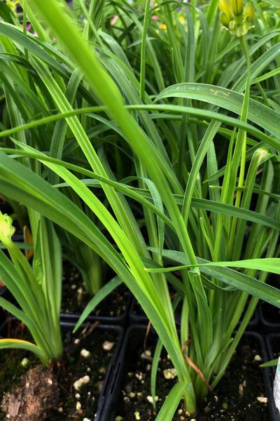 new perennial plants