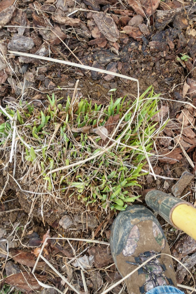 digging up plants
