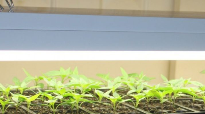 starting seeds with fluorescent lights