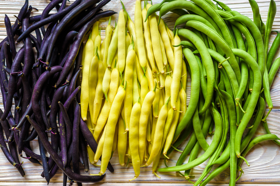 how to grow purple green beans