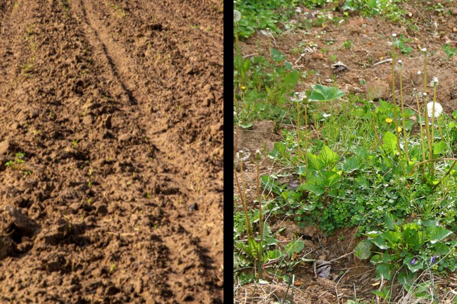 tilling soil problems