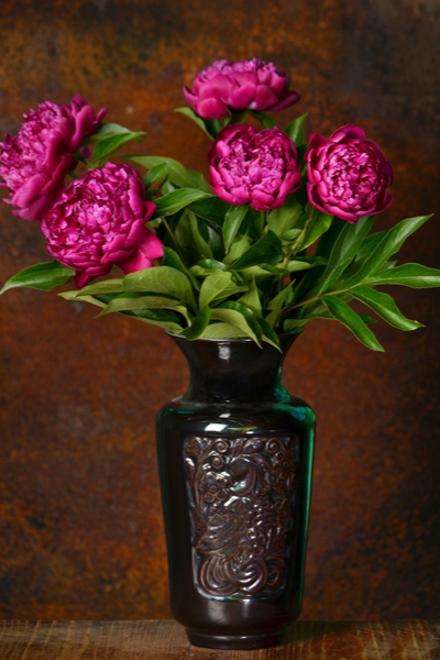 growing peonies - cut flowers