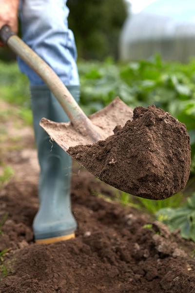 eliminating weeds in the vegetable garden - no till