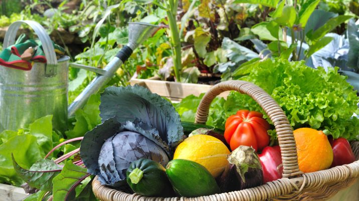 garden tips for new gardeners