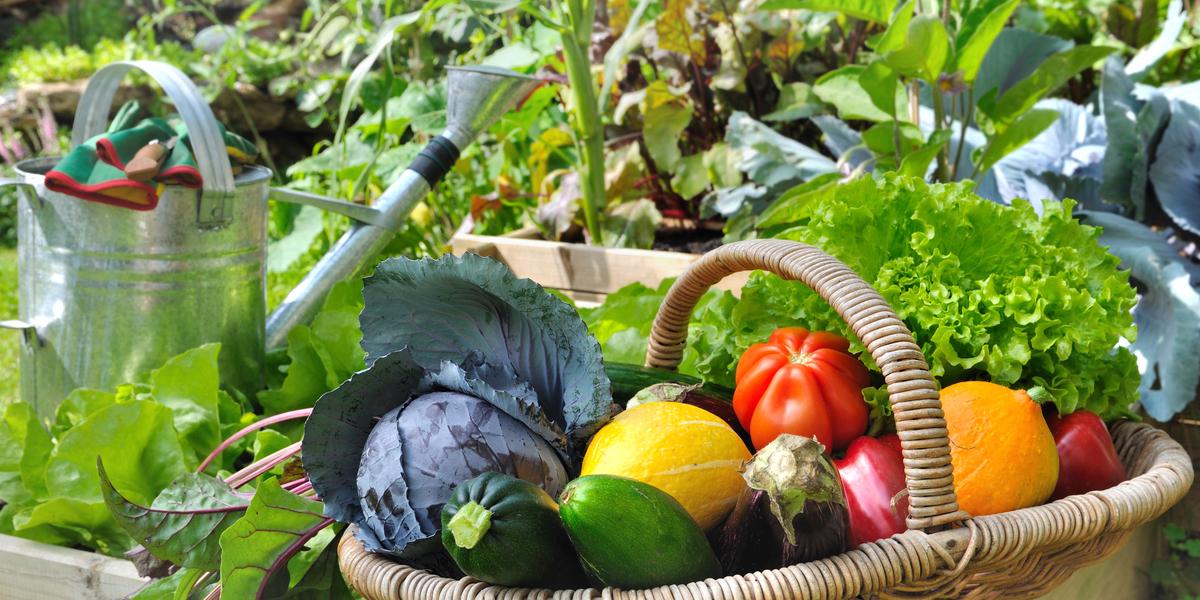 garden tips for new gardeners