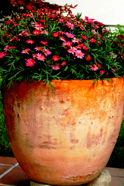 keep flower pots blooming