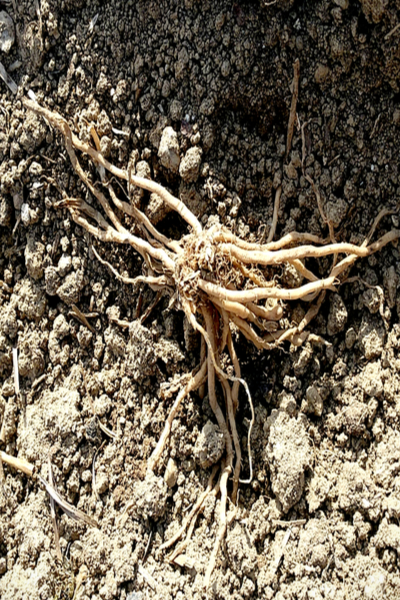 roots in the ground
