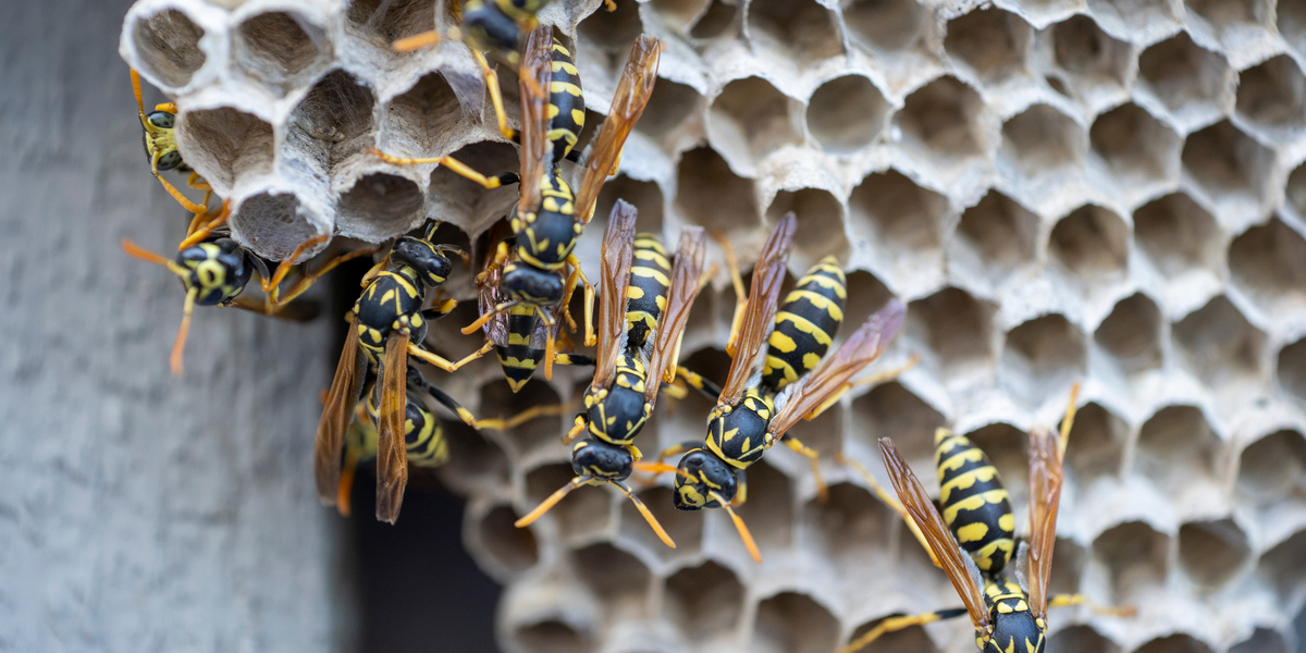 wasps and gardening