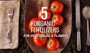 5 Organic Fertilizers To Power Your Vegetable Plants & Flowers!